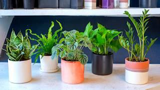 10 Plantes Impossibles à Faire Crever (Même Si Vous N'avez Pas la Main Verte)