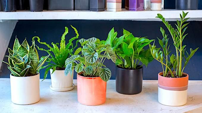 10 Plantes Impossibles à Faire Crever (Même Si Vous N'avez Pas la Main Verte).