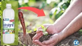 17 Utilisations Incroyables du Vinaigre Blanc au Jardin