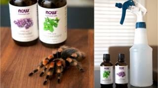Comment Éloigner les Araignées de Sa Maison Avec des Huiles Essentielles