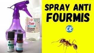Comment Éloigner les Fourmis Avec un Spray aux Huiles Essentielles
