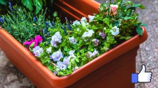 Comment Nettoyer et Désinfecter Vos Jardinières En Plastique