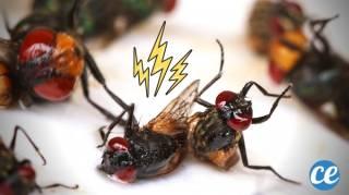 20 Remèdes Naturels Pour En Finir Avec les Mouches SANS Insecticides