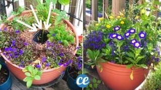 Comment Faire un Réservoir d'Eau Pour Plantes avec 1 Bouteille en Plastique
