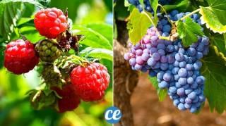 Haie Fruitière : 10 Arbustes à Planter Pour Avoir des Fruits Dans Sa Haie