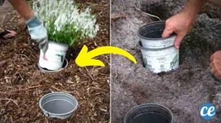L'Astuce Pour Changer l'Emplacement des Plantes Saisonnières FACILEMENT