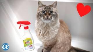 Pourquoi Les Chats Sont-ils Attirés par l'Odeur de Javel