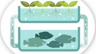 Qu'est-Ce Que l'Aquaponie  Le Schéma Pour Tout Comprendre