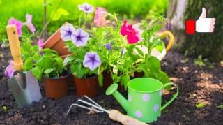 25 Astuces de Jardinage Que Tous les Jardiniers Devraient Connaître