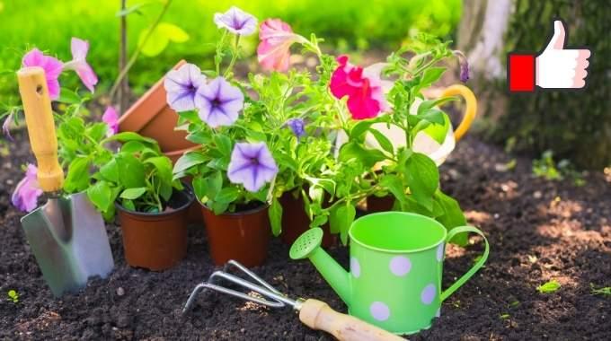 25 Astuces de Jardinage Que Tous les Jardiniers Devraient Connaître.