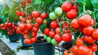 Facile : 25 Légumes et Fruits à Faire Pousser En Pot (Sur SON BALCON)