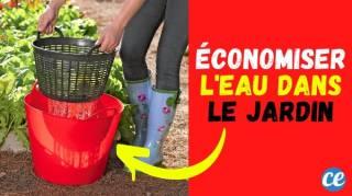 Lavez Vos Légumes Dans le Jardin et Réutilisez l'Eau Pour Arroser Vos Plantes