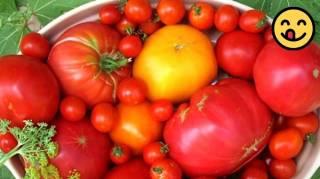 Le Secret de Jardinier Pour Faire Pousser des Tomates en Seulement 1 Semaine