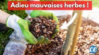 Les 10 Meilleurs Paillis Pour Tuer les Mauvaises Herbes AU NATUREL