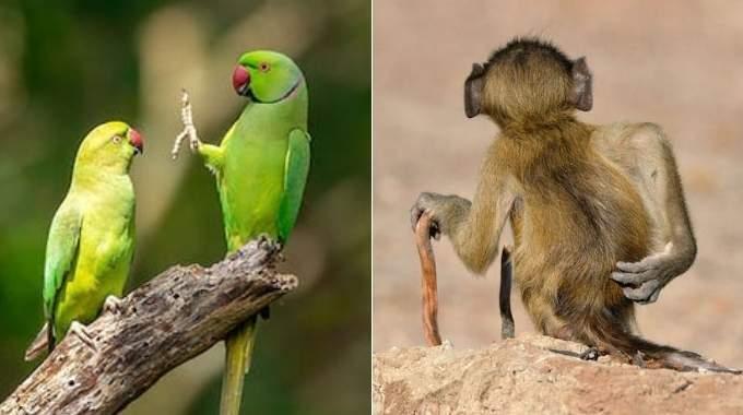 Les 41 Photos d'Animaux les Plus Rigolotes Que Vous N'ayez Jamais Vues.