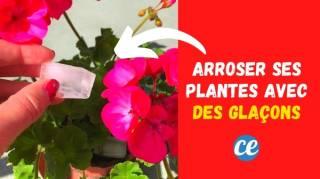 4 Bonnes Raisons d'Arroser vos Plantes Avec des Glaçons