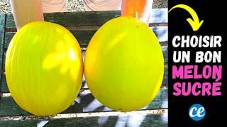 Comment Choisir un Bon Melon Jaune Bien Sucré  L'Astuce à Connaître