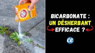Le Bicarbonate de Soude : Un Désherbant 100% Naturel et Efficace