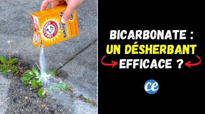 Le Bicarbonate de Soude : Un Désherbant 100% Naturel et Efficace ?