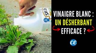 Le Vinaigre Blanc : Un Désherbant 100% Naturel et Efficace