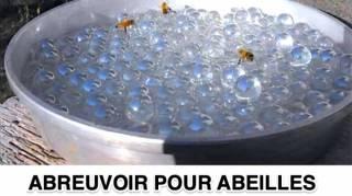 Voici Comment Aider les Abeilles à Rester Bien Hydratées Cet Été