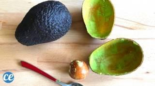3 Bonnes Raisons De ne Plus Jeter les Peaux d'Avocat