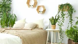 Anxiété : 5 Plantes à Mettre Dans Sa Chambre Pour Mieux Dormir Dès Ce Soir