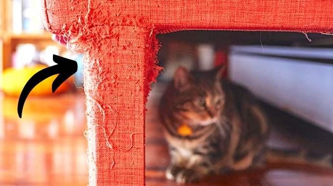 L'Astuce Pour Enlever les Griffures de Chat sur un Canapé en Tissu.