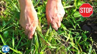 Mauvaise herbes : 10 Espèces à Ne Surtout Pas Arracher de Son Jardin