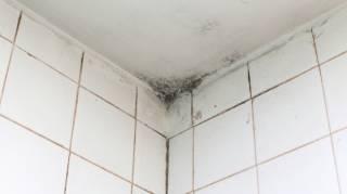 Moisissures Salle de Bain : 7 Astuces Nettoyage Pour les Supprimer