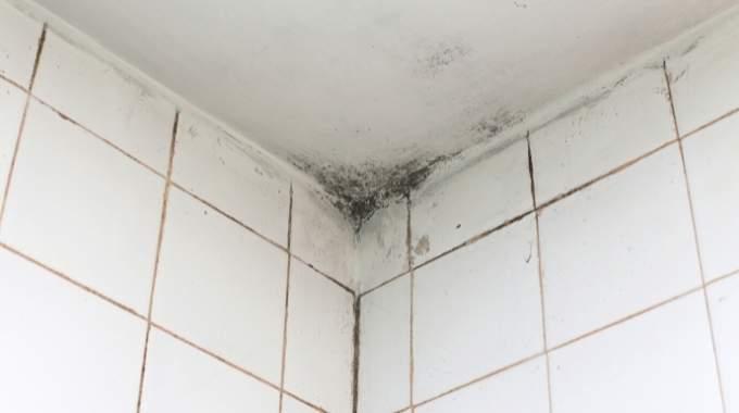 Moisissures Salle de Bain : 7 Astuces Nettoyage (Pour les Supprimer Facilement).