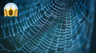 Comment Enlever une Toile d'Araignée Facilement (MÊME au Plafond)