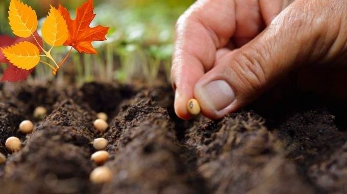 Que Planter en Octobre au Potager ? 11 Légumes Qui Poussent Facilement en Automne.