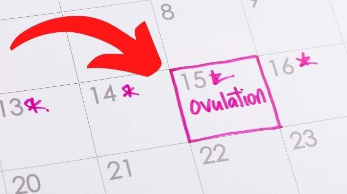 Comment Savoir Si On Est en Période d'Ovulation ? 6 Signes Qui ne Trompent Pas.
