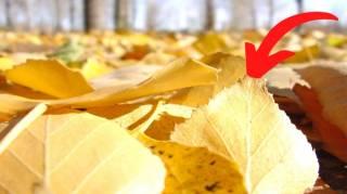 Ne Jetez Plus les Feuilles Mortes  Voici 14 Façons Étonnantes de les Réutiliser