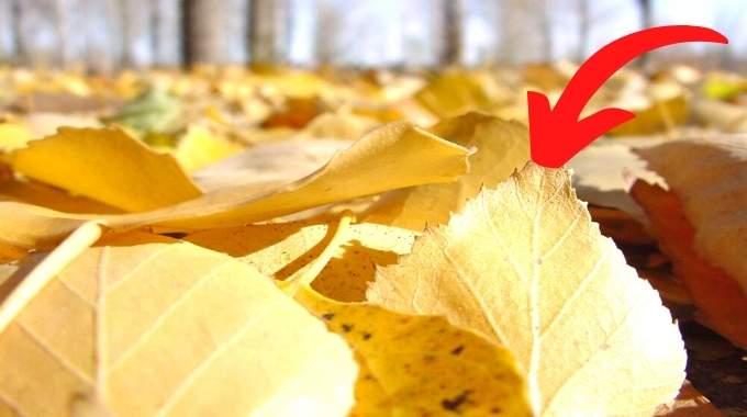 Ne Jetez Plus les Feuilles Mortes ! Voici 14 Façons Étonnantes de les Réutiliser.