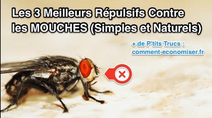 Les 3 meilleurs r pulsifs contre les mouches simples et naturels - Produit naturel contre les mouches ...