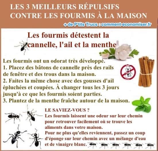Les 3 meilleurs répulsifs naturels contre les fourmis à la maison