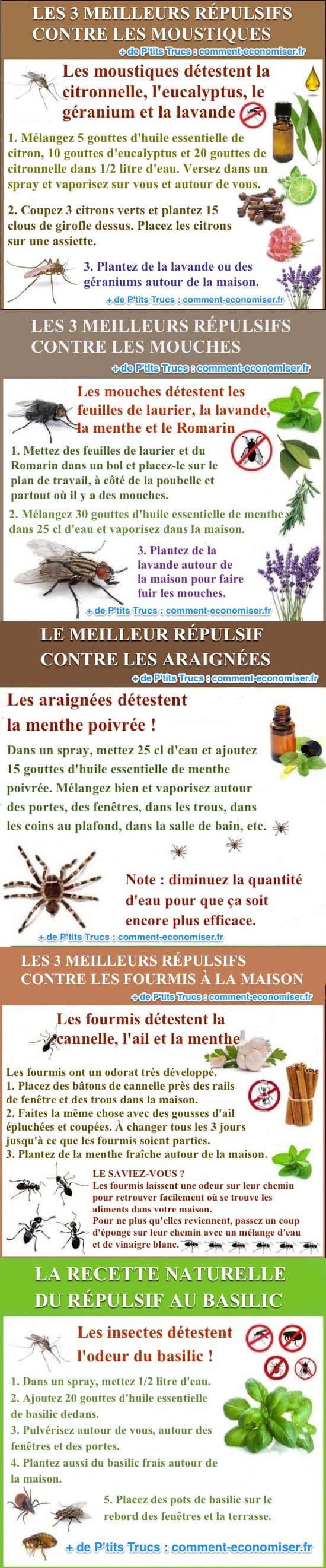 Les trucs et astuces naturels contre les insectes à la maison