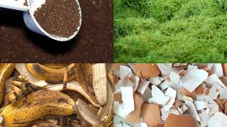 7 engrais naturels économiques jardin