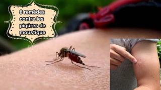 8 remedes contre piqures moustiques