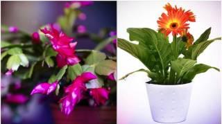9-plantes-liberent-oxygene-meme-la-nuit