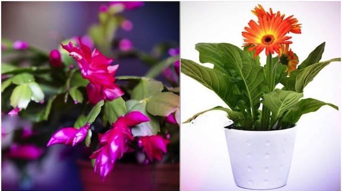 9 Plantes Qui Libèrent de l'Oxygène Même PENDANT LA NUIT.