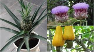 A quoi ressemble fruits et légumes quand ils poussent