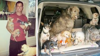 adoption vieux chiens vie meilleure