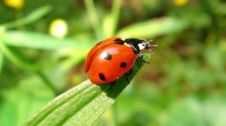 animaux utiles jardin anti nuisibles