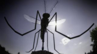 anti moustique sans produit chimique