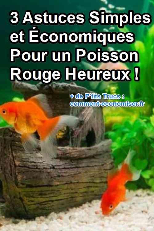 3 astuces simples et conomiques pour un poisson rouge for Aquarium poisson rouge changer l eau