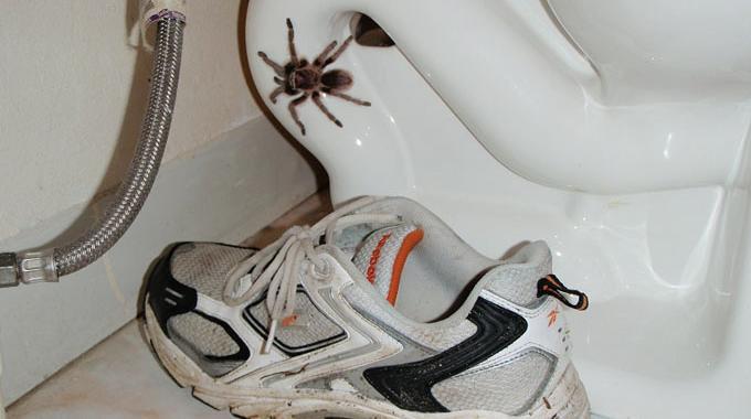 9 astuces naturelles pour faire fuir les araign es de for Araigne sauteuse maison