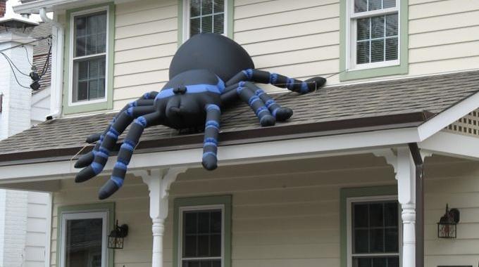 Comment lutter contre les araign es la maison for Araigne sauteuse maison